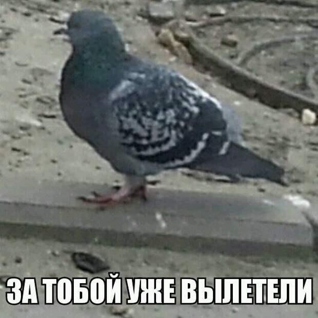 1453387461_memy-s-zhivotnymi-9