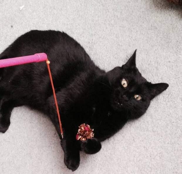 10 фото, доказывающих, что коты тоже могут быть нефотогеничными