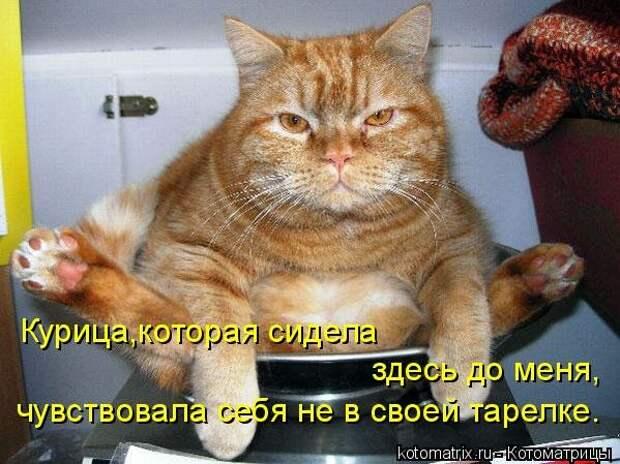 1451737544_kotomatricy-16
