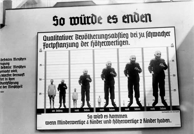 Евгенистический агитационный плакат, на научной выставке в Берлине в 1935 году.