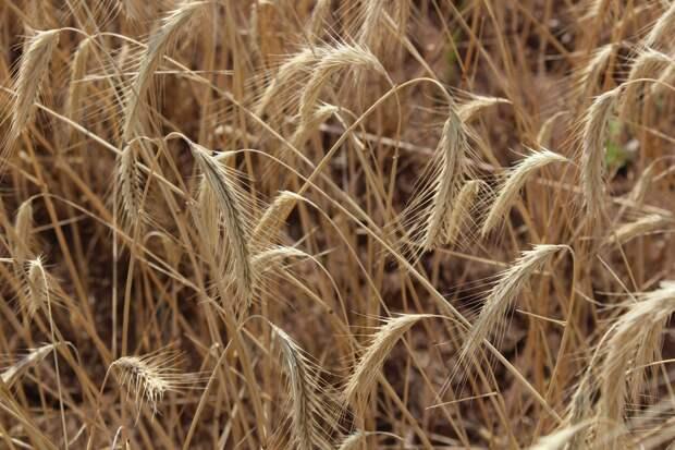 В Удмуртии ввели режим ЧС из-за засухи