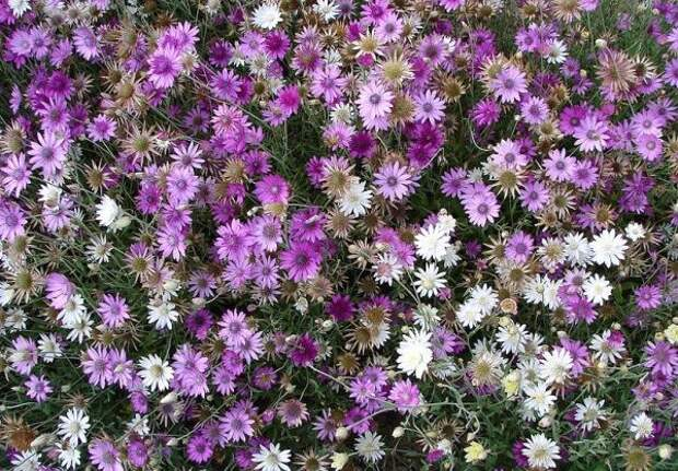 Цветы-сухоцветы: 20 самых красивых растений и идеи композиций