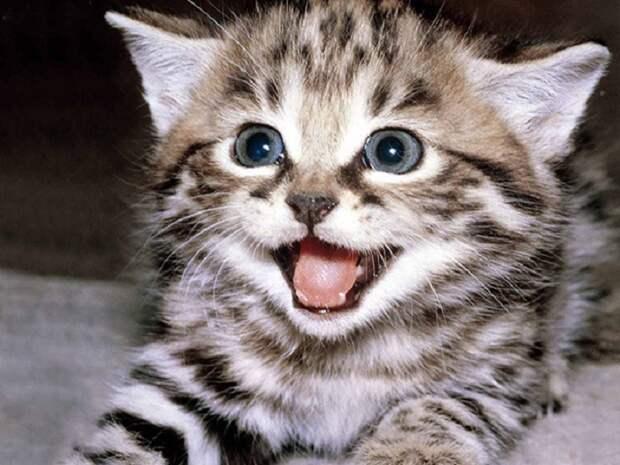 Случаи, когда коты блеснули сообразительностью