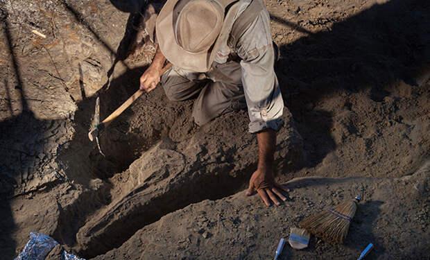 Ученые полагают, что на Луне могут быть следы динозавров, которые попали туда с Земли