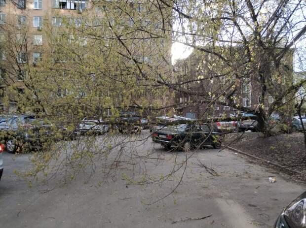 На Октябрьской дерево упало на машину