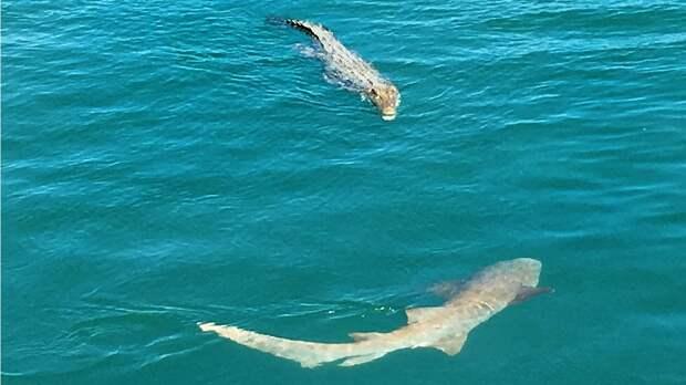 Лодке туристов перекрыли путь стая акул и крокодил