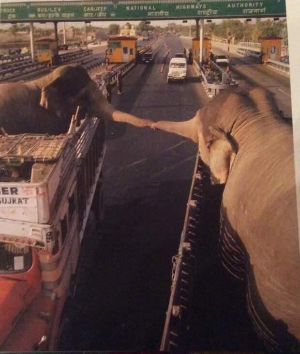 Картинки по запросу Слон