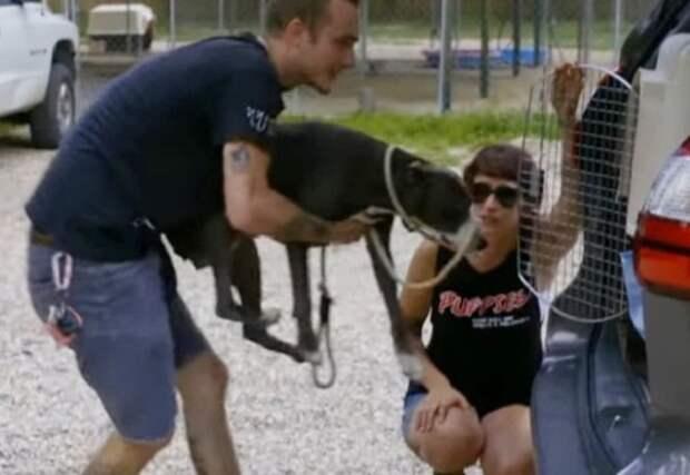 Спрятанных щенков сумели спасти волонтеры приюта