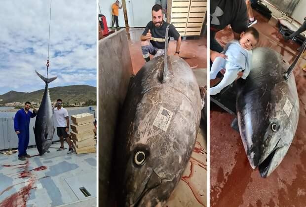 Испанские рыбаки поймали тунца-чемпиона