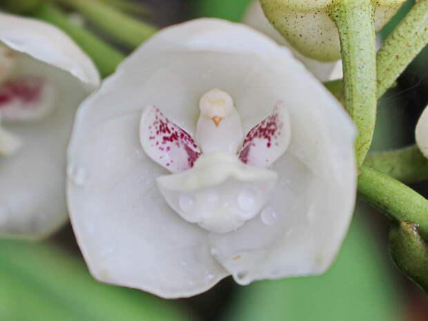 20 странных растений, которые природа создала, будто развлекаясь