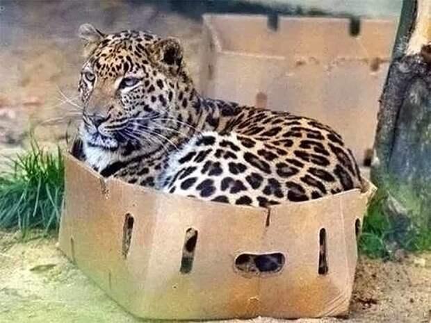 Размер не имеет значения: 20+ примеров того, что кошки всегда остаются кошками