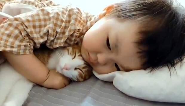 «Хочу всегда быть рядом»: кот заменил ребенку плюшевого мишку