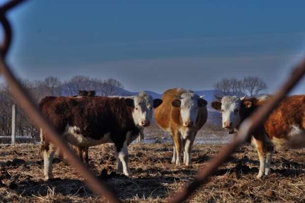 В сфере сельского хозяйства по итогам 2020 года Уссурийский округ сохранял лидерство