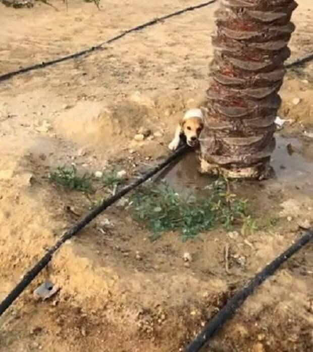 Щенок под пальмой