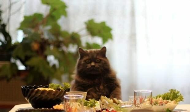 Кот Лютый