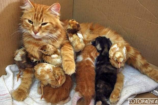 """""""Иногда устаешь быть мамой, но отдохнуть никто не разрешает!"""" Заряжаемся позитивом"""