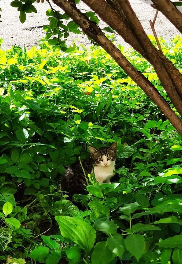 Ищем неравнодушного особенного человека для особенного котёнка, для настоящего солнечного зайчонка!