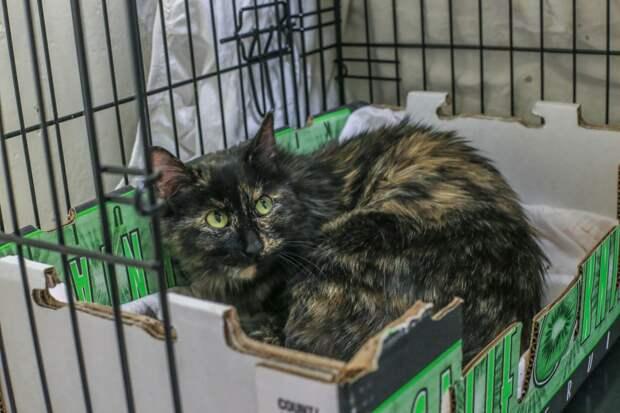 История кошки, которая хотела спасти жизнь новорожденному котенку