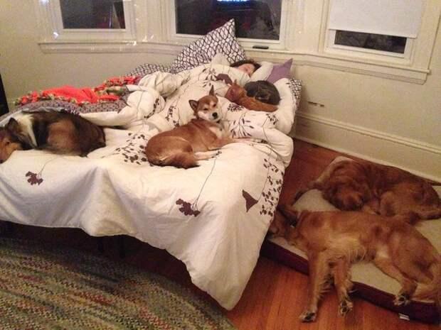 хозяева, обожающие своих собак