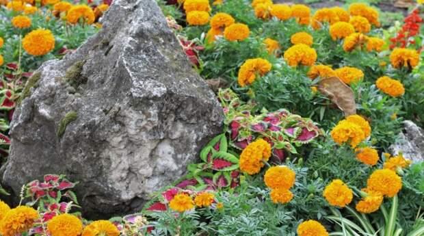 35 идей, как можно использовать камни и валуны в ландшафтном дизайне