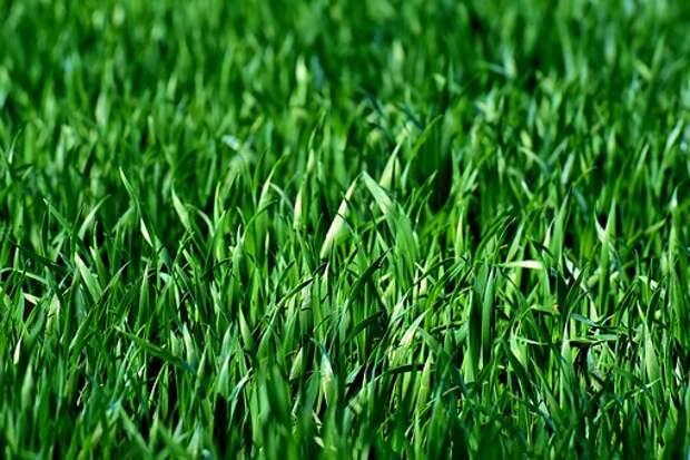 В парке на Ангарской привели в порядок газон