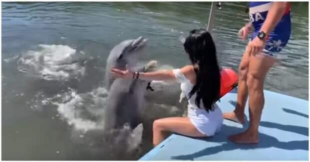 Дельфин слишком буквально воспринял знаки внимания девушки аквапарк, видео, девушка, дельфин, куба, прикол, турист, юмор