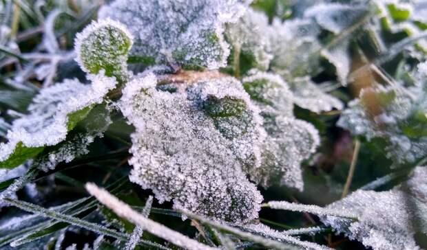 Синоптики обещают заморозки