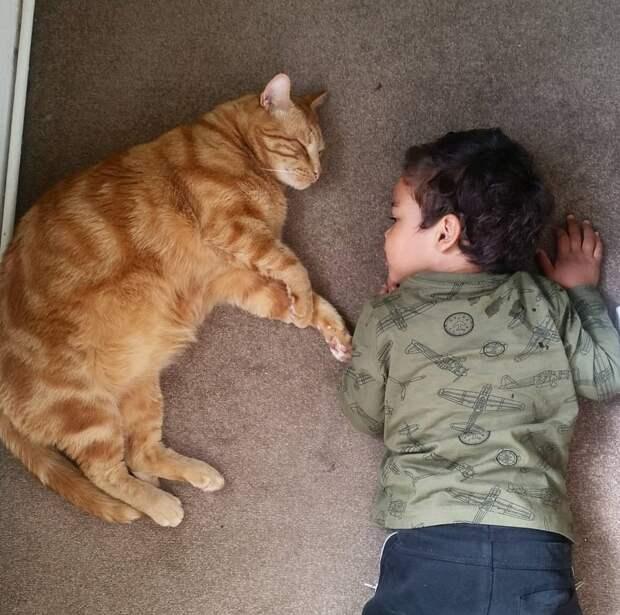 12. Дружба крепкая животные, животные и дети, кошки, питомцы, собаки, фото