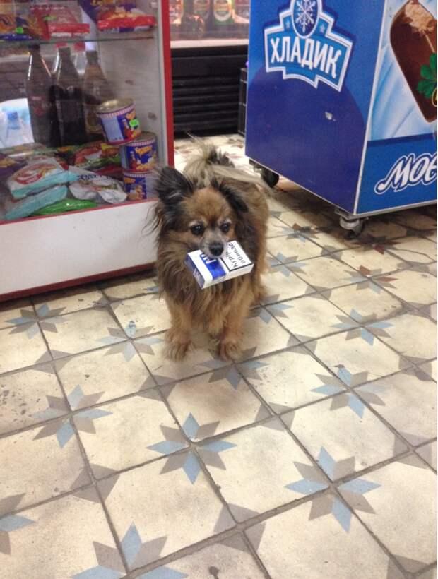 Найденный щенок (пока без имени)