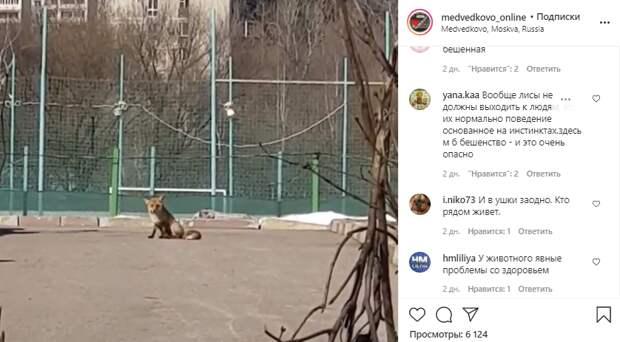 Фото дня: лиса на спортивной площадке возле парка «Яуза»