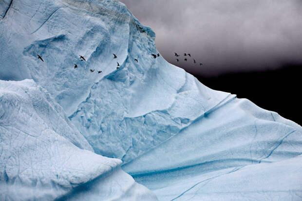 Как выглядят таящие айсберги. Глыбы льда посреди океана