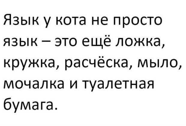 Язычок у кота)