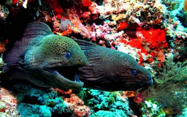 Почему нельзя купаться ночью в Красном море