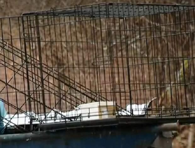 На самом верху мусорного бака стояла клетка с собакой. А в эти дни температура воздуха опускалась все ниже