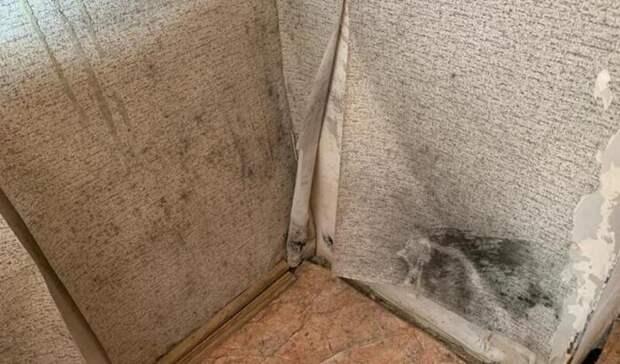 Сиротам покупают вРостовской области квартиры сплесенью за1,4млн рублей