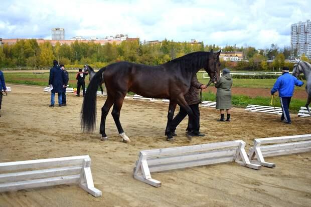 Конные клубы Ижевска остались без денег на содержание лошадей