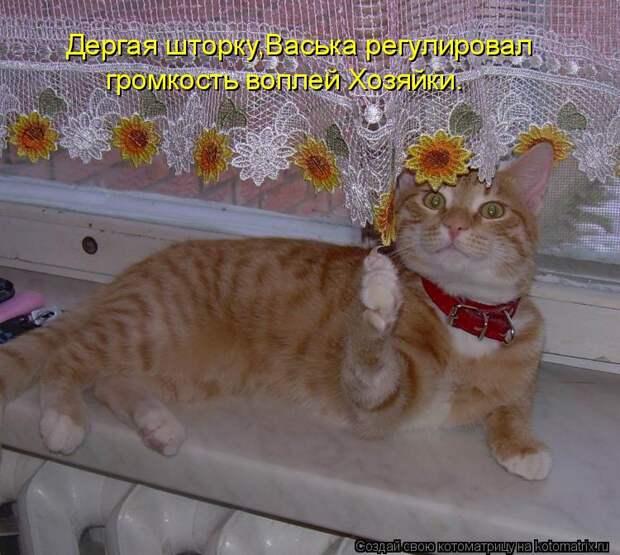 Котоматрица: Дергая шторку,Васька регулировал громкость воплей Хозяйки.