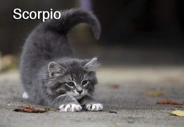 Коты как знаки зодиака