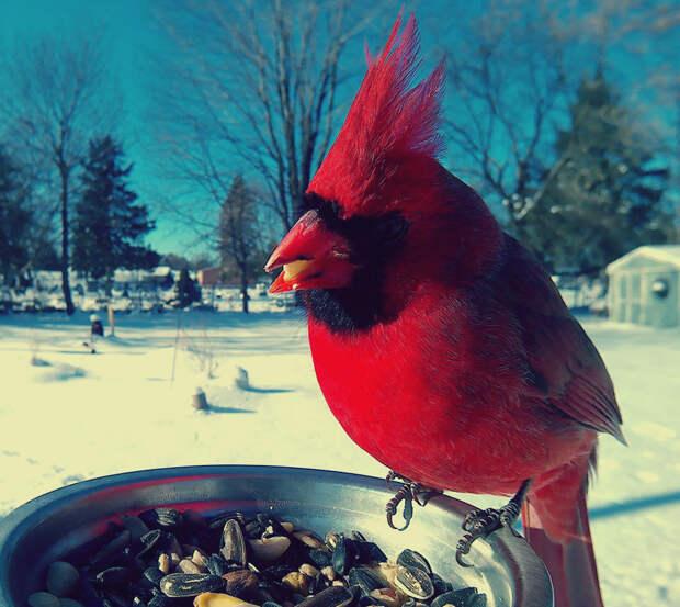 лучше приготовить в какую погоду лучше фотографировать птиц низовом