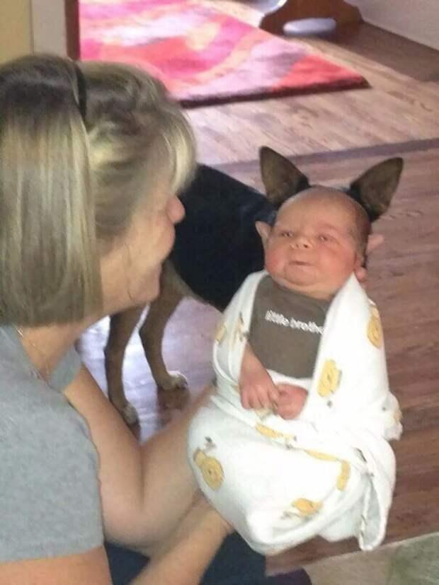 6. «Малыш, зачем тебе такие большие уши?» в мире, животные, забавно, кадр, подборка, показалось, прикол, юмор
