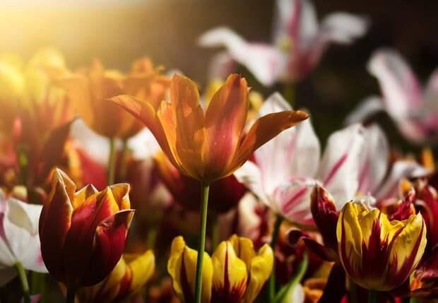 Жители Кузьминок рады видеть под своими окнами цветы – результаты опроса