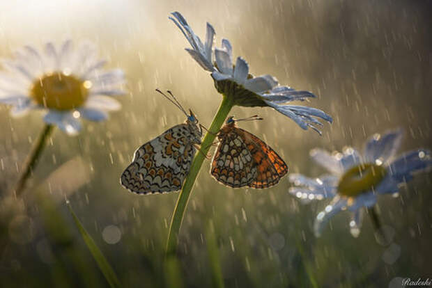 Броня на крыльях бабочки защищает ее от сильного дождя