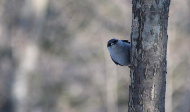 ВНижнем Тагиле птица застряла ввентиляции многоэтажного дома наГГМ