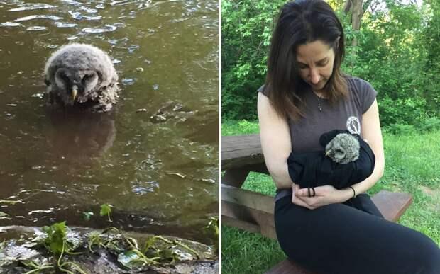 Женщина нашла в реке сову: она не могла улететь и нуждалась в помощи