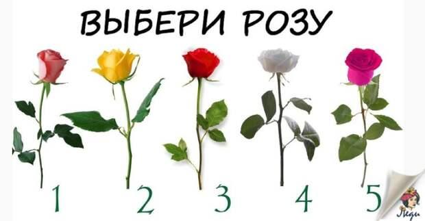 Роза, которую вы выбрали расскажет сбудется ли желание