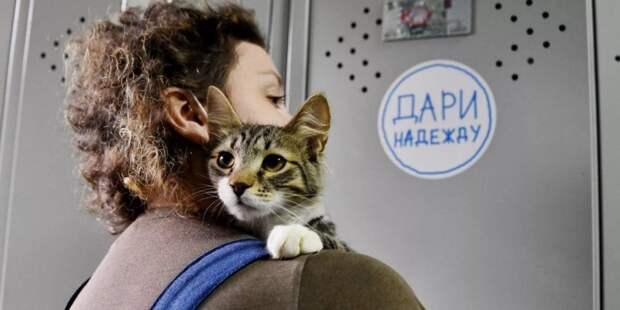 Москвичи собрали рекордное количество кормов в помощь приютам для бездомных животных