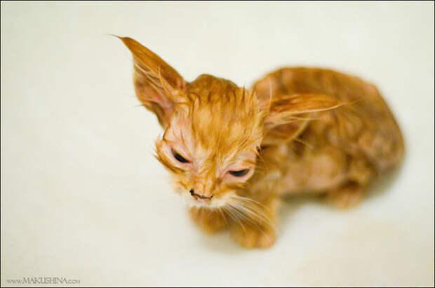 Её преобразила любовь! Вы будете поражены историей спасения котенка в 19 фотографиях!)