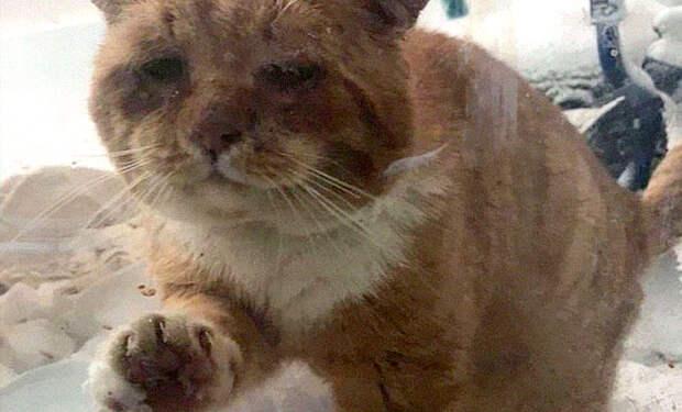 В сырую холодную погоду в окно женщины постучал замерзший уличный кот и попросил его впустить