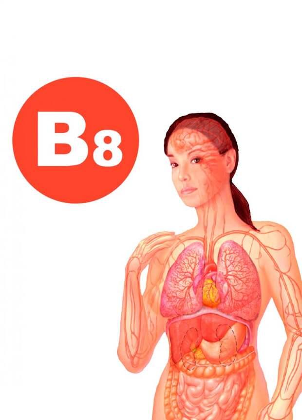 Что нужно знать про витамин В8