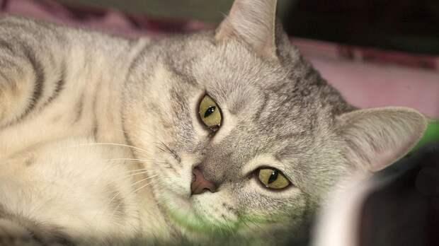 Застрявшего в двигателе автомобиля кота спасли в Северодвинске